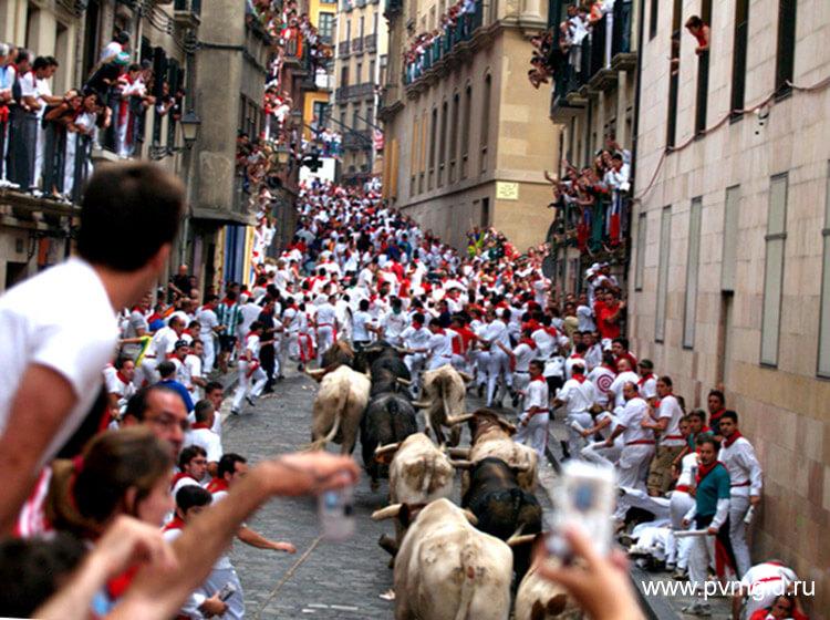 Бег быков в Памплоне - фото