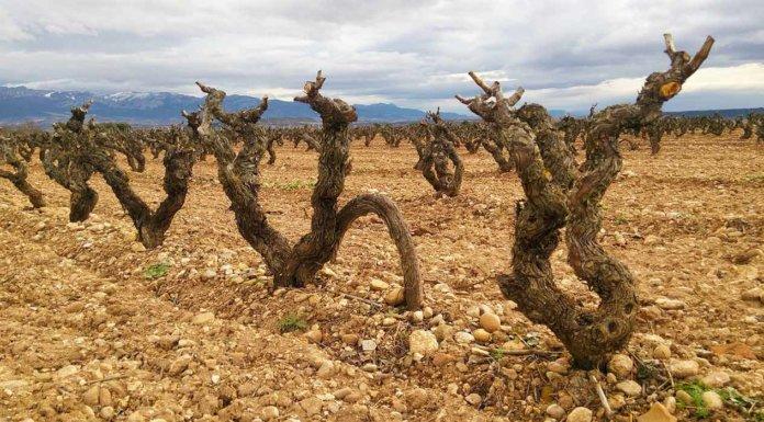 Виноградник в Риохе