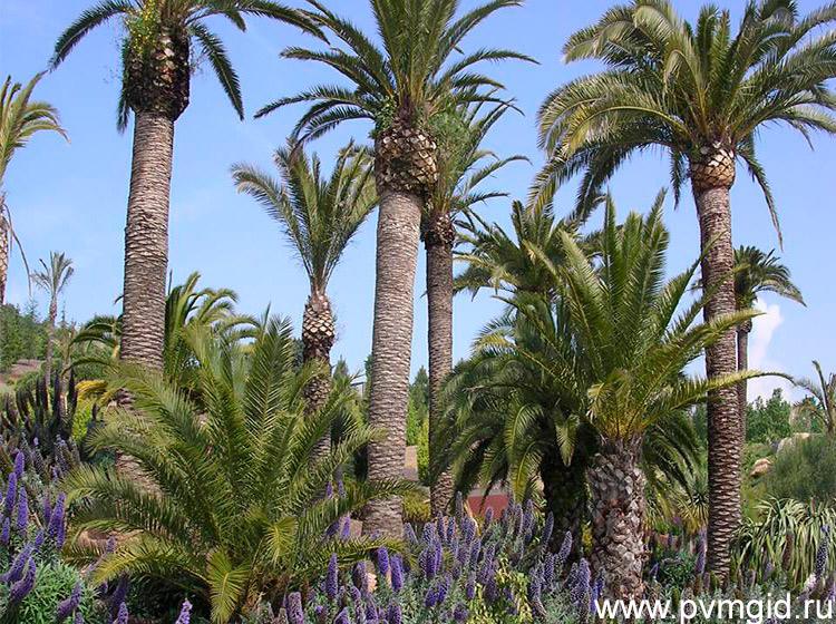 Ботанический_сад_Барселоны_2