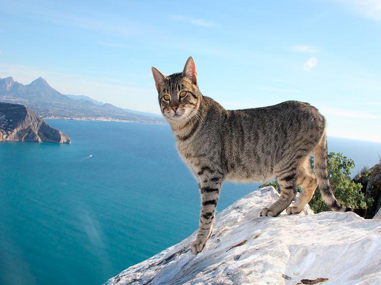 Кошки на скале Ифач - фото
