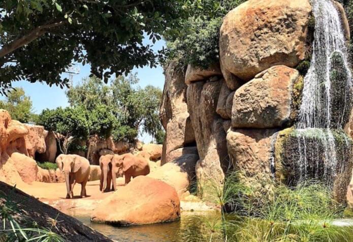 Животные в биопарке Валенсии