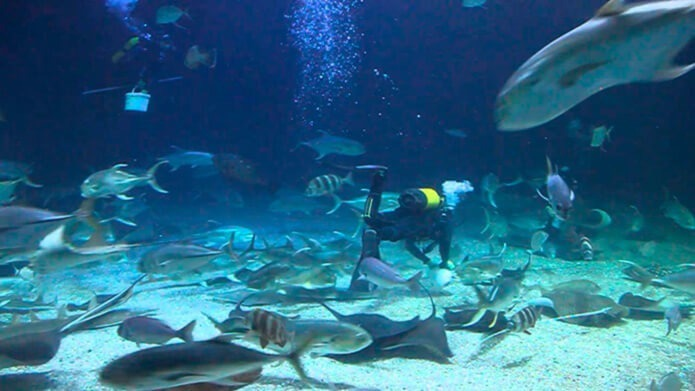 Дайвинг с акулами - одна из услуг в аквариуме Валенсии