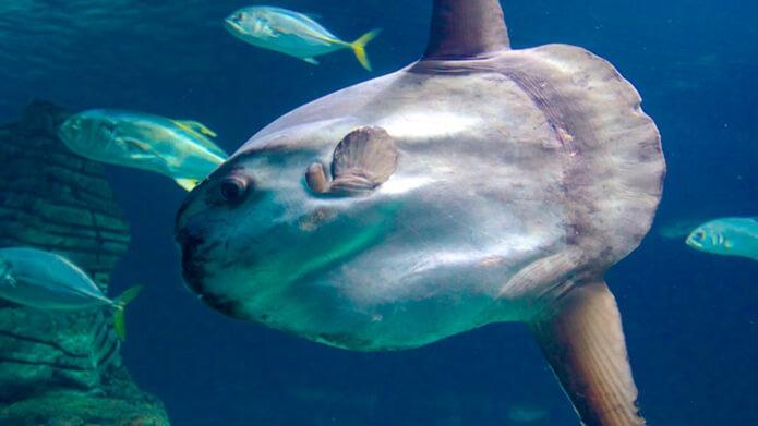 Одна из зон аквариума Валенсии