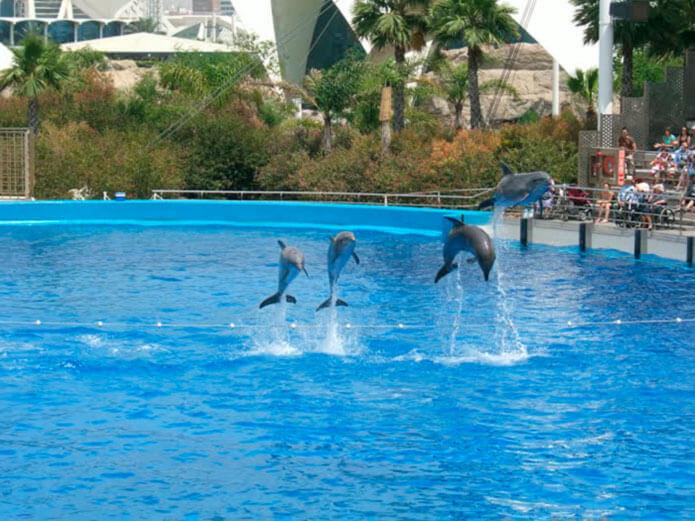 Шоу дельфинов в океанариуме Валенсии