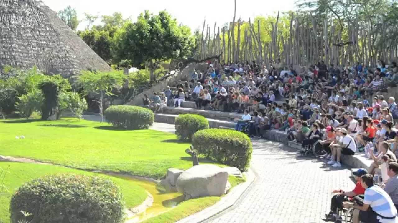 Представление в зоопарке