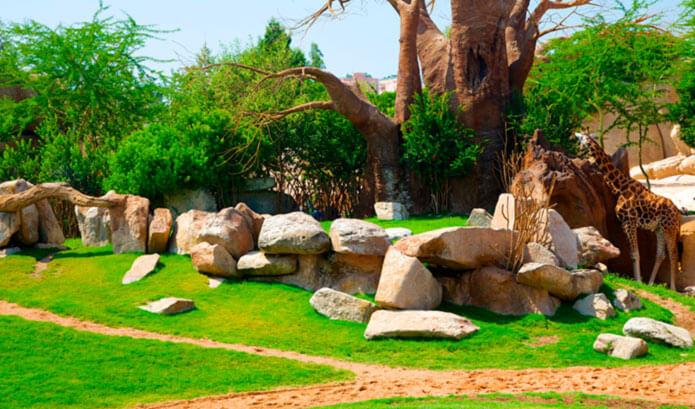 Жирафы в биопарке