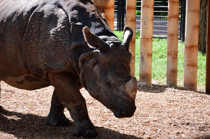 Носорог в мадридском зоопарке