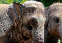 Слоны в зоопарке Мадрида