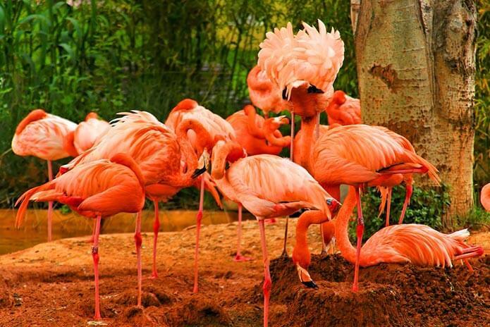 Фламинго в барселонском зоопарке