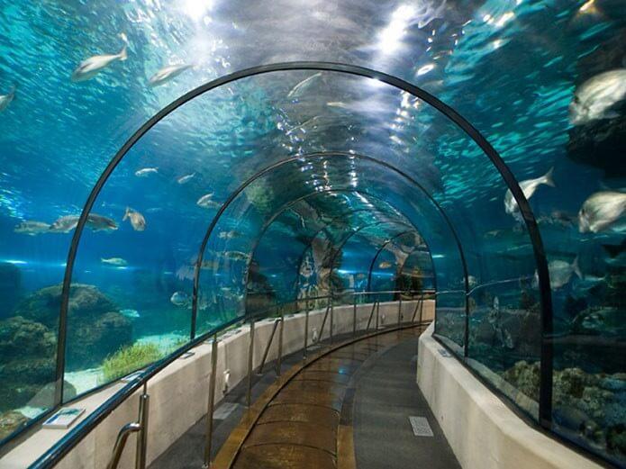 Тоннель в аквариуме - фото