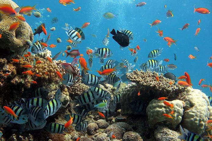 Обитатели аквариума Барселоны - фото