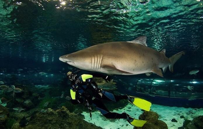 Дайвинг с акулами - фото