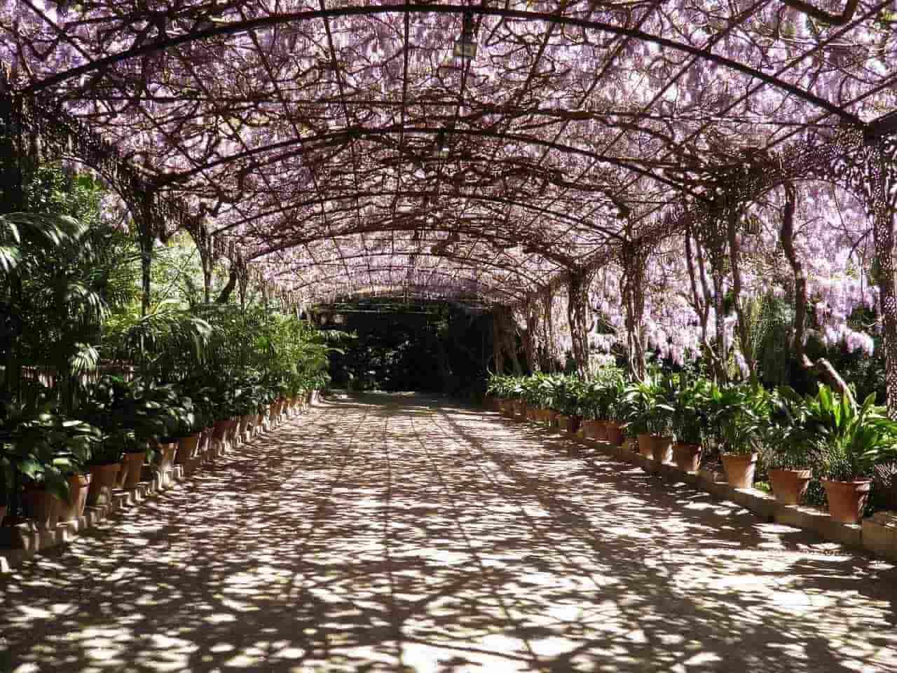Ботанический сад Малаги - фото