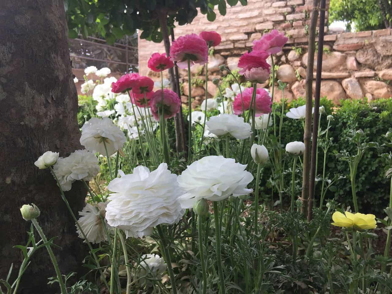 Сады Хенералифе - фото