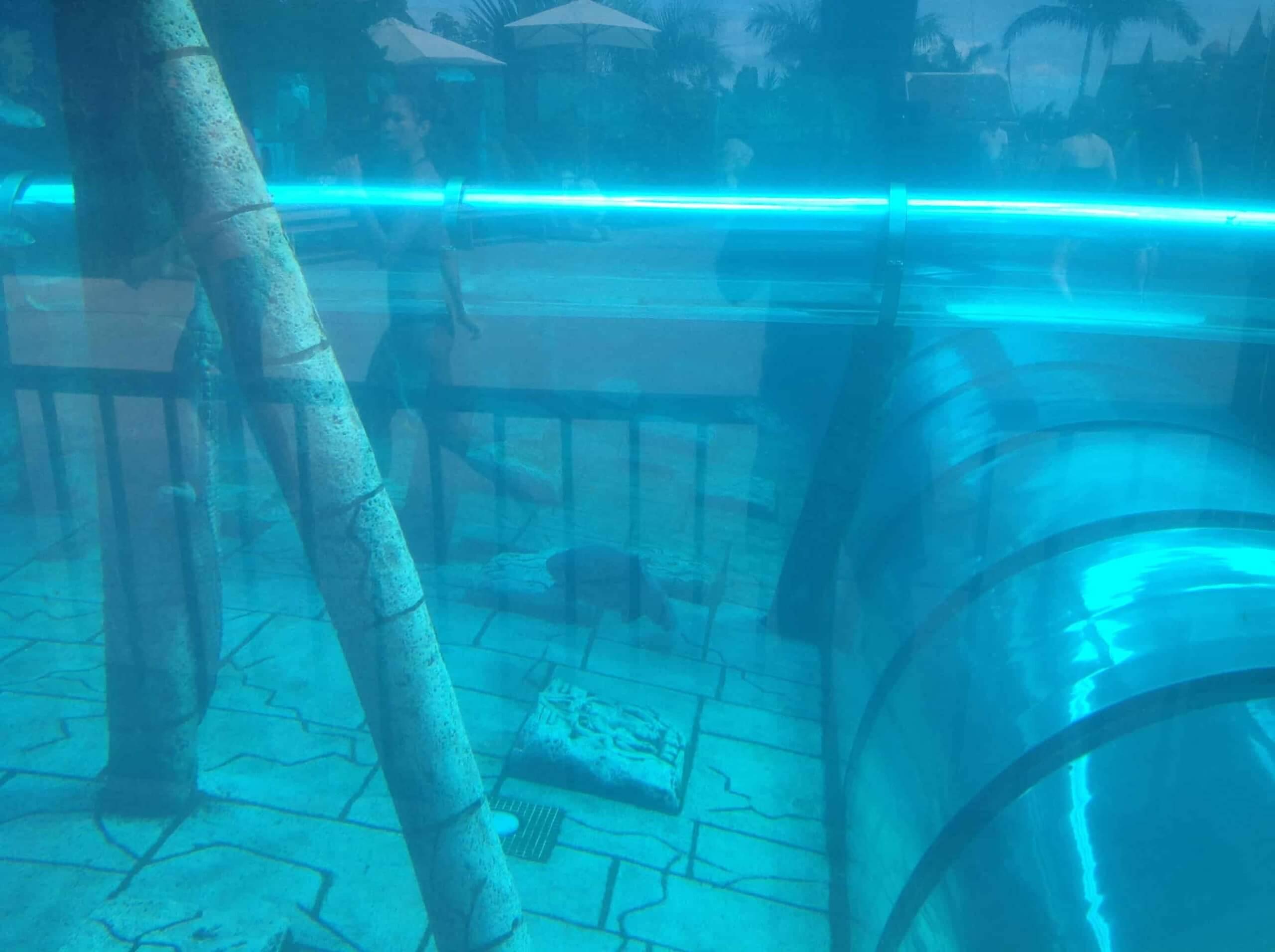 Пролет через тоннель с акулами в Сиам Парке - фото